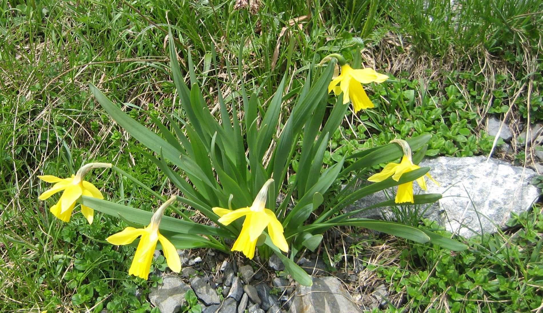 Narcisse (crédits: Evelyne Liauzun)