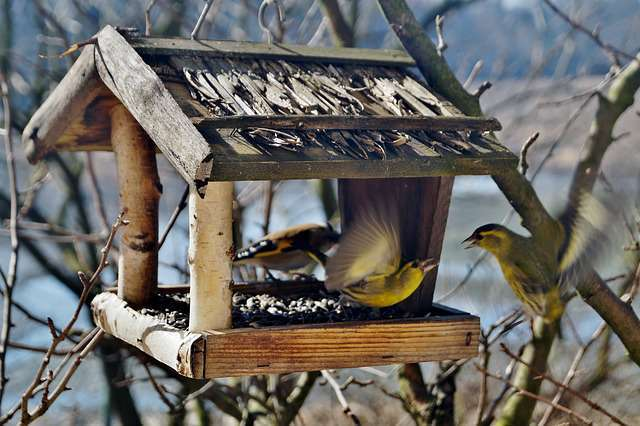 Mangeoire à oiseaux en bois