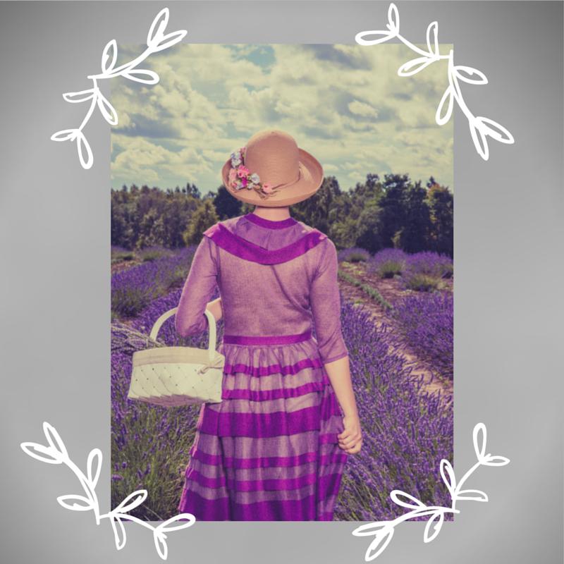 Lavandes La Provence de Fanny