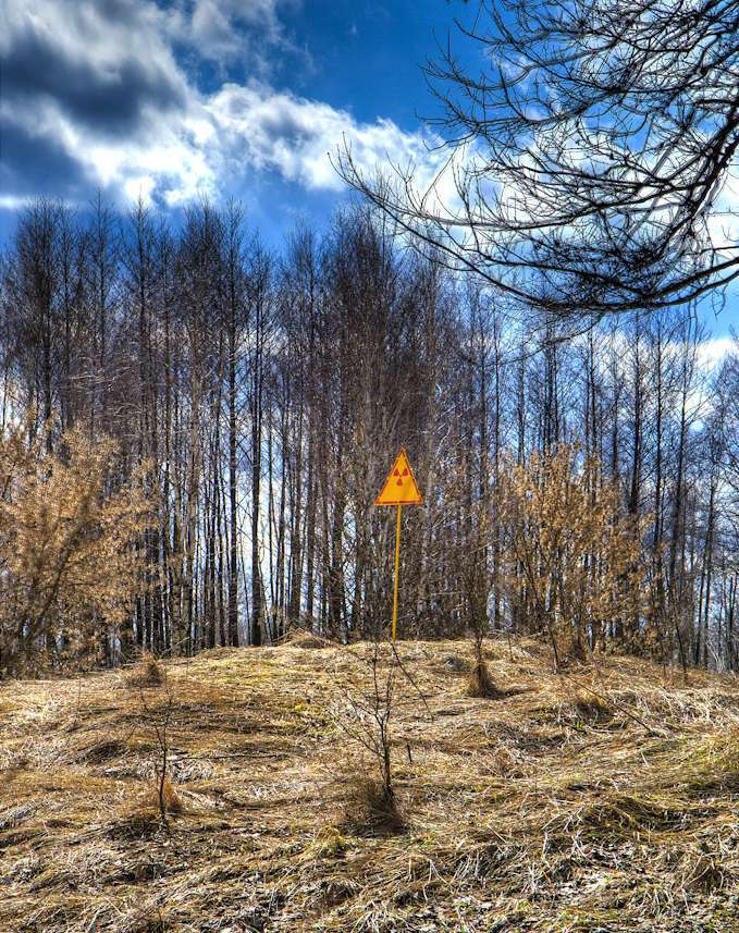 La forêt à Tchernobyl
