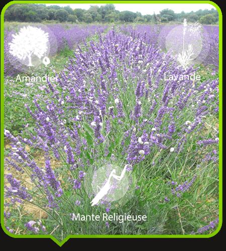 imitation peinture c/éramique /él/égance r/étro SSINI Boucles doreilles fleur blanches