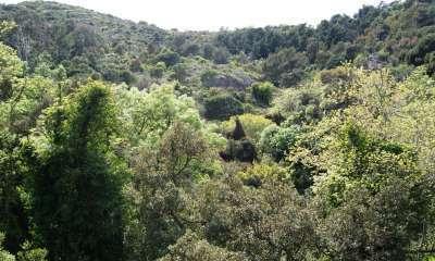 Forêt de Belle Pierre, La Seyne-sur-Mer