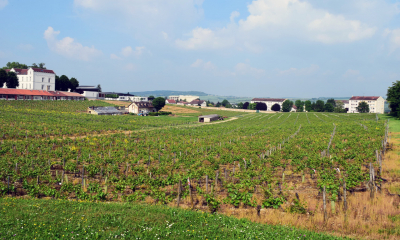 Centre ville d'Auxerre. Ici, les vignes du CHS de l'Yonne.