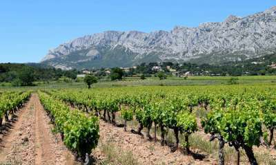 Balade du sentier des vignerons de la Montagne Sainte Victoire - Puyloubier (Crédits : Léa Charbonnier)
