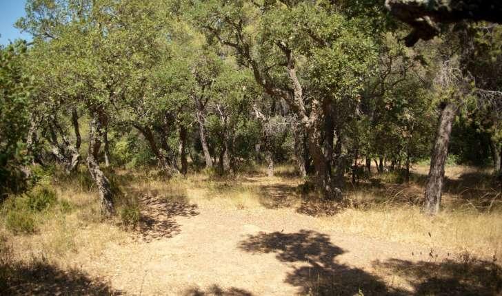 Suberaie - Forêt de chêne liège