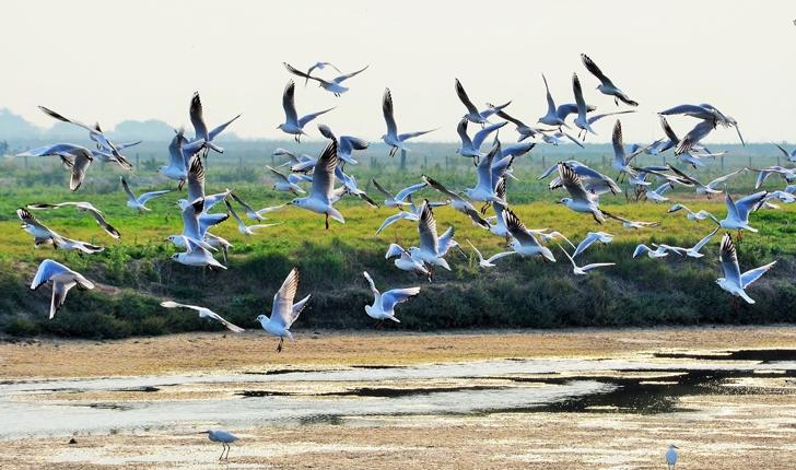 Ballet aérien dans les marais ( crédits YGUYOT)