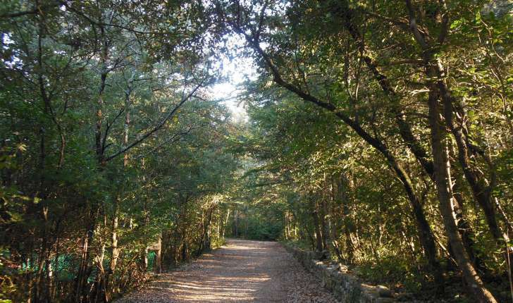 La forêt méditerranéenne - (Crédits Aoubré)
