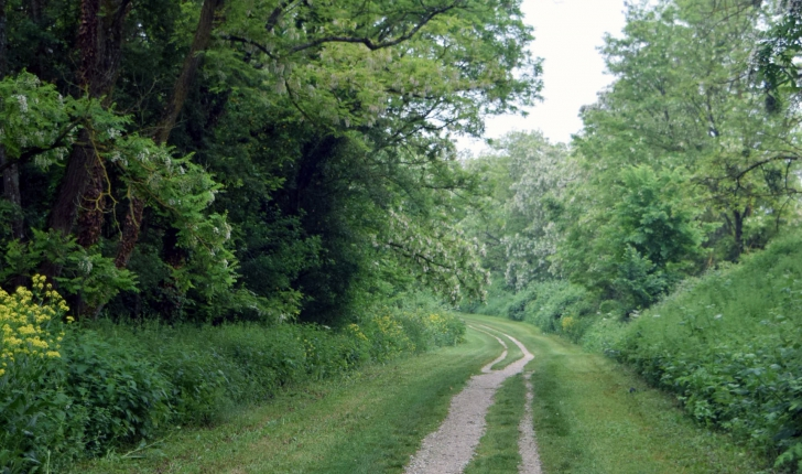 La coulée verte sur le circuit des Brichères.