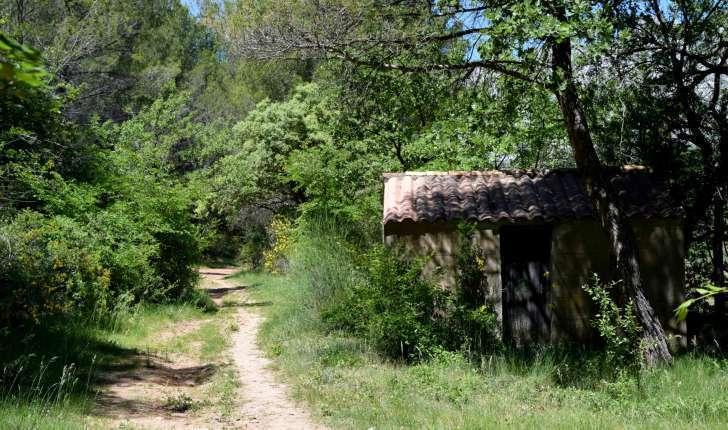 Sentier dans la forêt (Crédits : Léa Charbonnier)