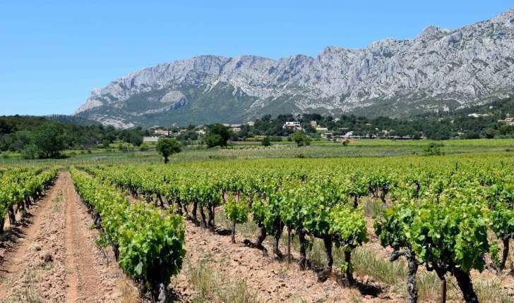 Vignes et Montagne Sainte-Victoire (Crédits : Léa Charbonnier)