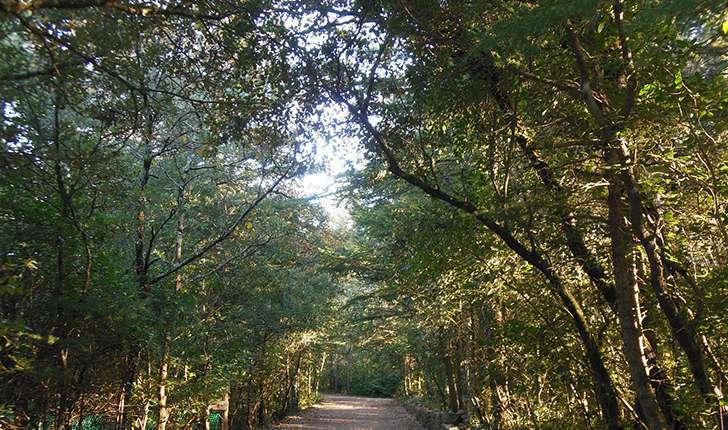 Forêt (Crédits: Parc d'Aoubré)