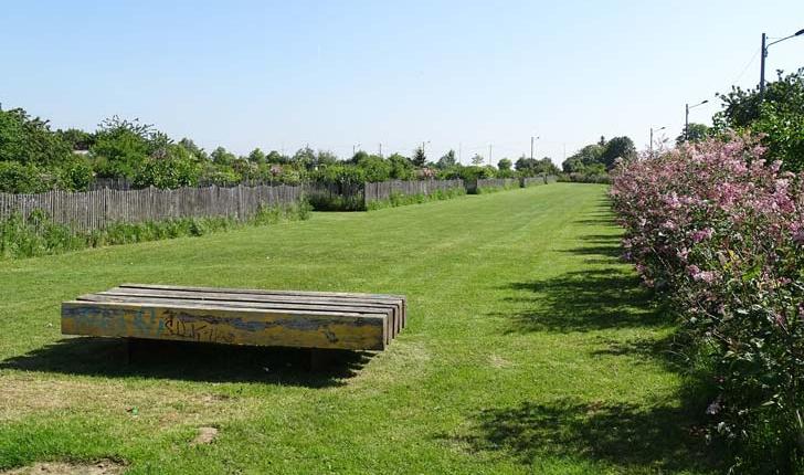 Collection de lilas - Crédit Département du Val de Marne