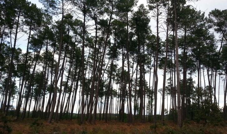 la forêt de Brocas - crédit Cyril Gautreau