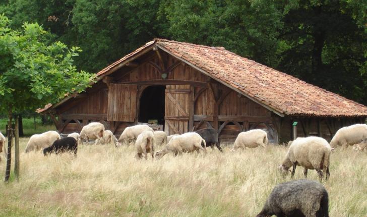 Marquèze Bergerie - crédit Frédérique DEYRIS Parc Naturel Régional des Landes de Gascogne