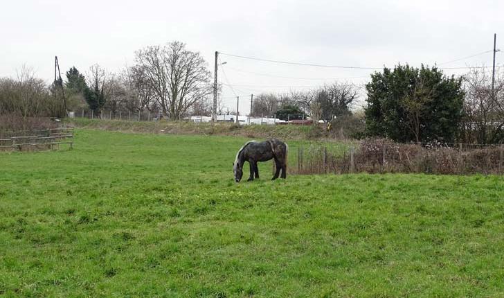 Pâturage - Greenhorse - Crédit Département du Val de Marne