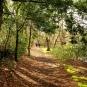 Bois Henan-crédit-Bretagne-Vivante