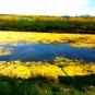 Valse des couleurs à Lileau des Niges (crédits totogiviste)